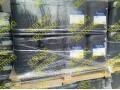 比利时太阳牌冷冻油3GS