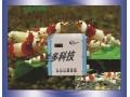 鱼缸水温控制调节设备