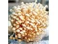 蘑菇冷库订做安装